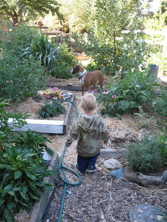 In the Garden....