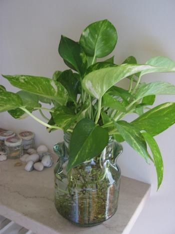 una pianta per ogni stanza | ilnostrospazio - Piante Per Camera Da Letto