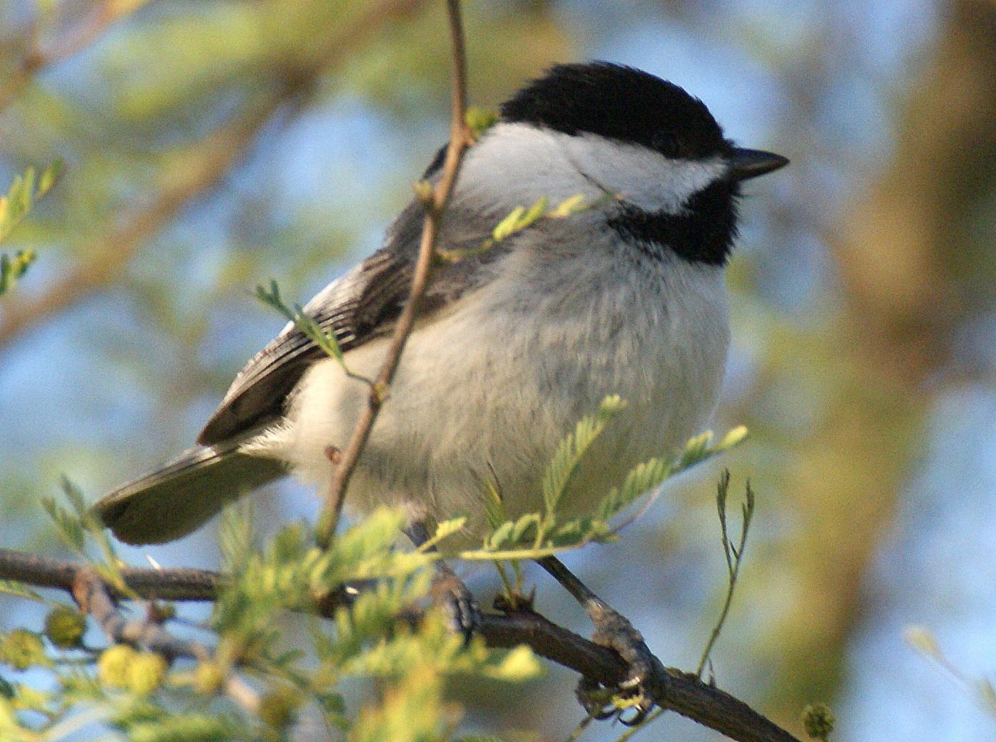 Se Texas Birding Amp Wildlife Watching Hill Country Trip