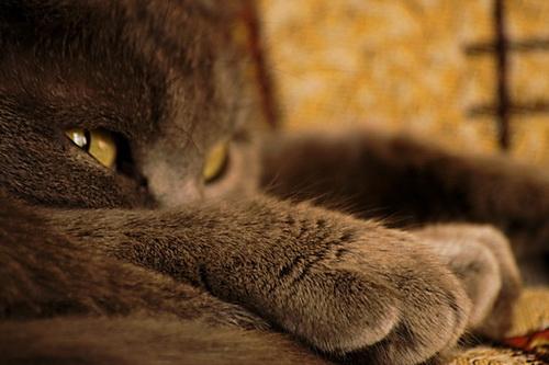 кот в печали