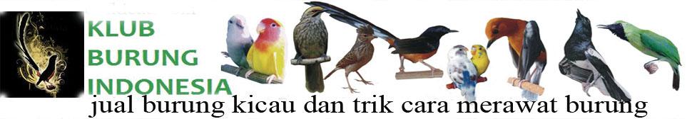 Jual Burung Online