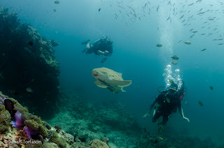 Leopard Sharks and Scuba DIvers at Phuket Shark Point - Phuket Diving Image taken by Johan Torfason