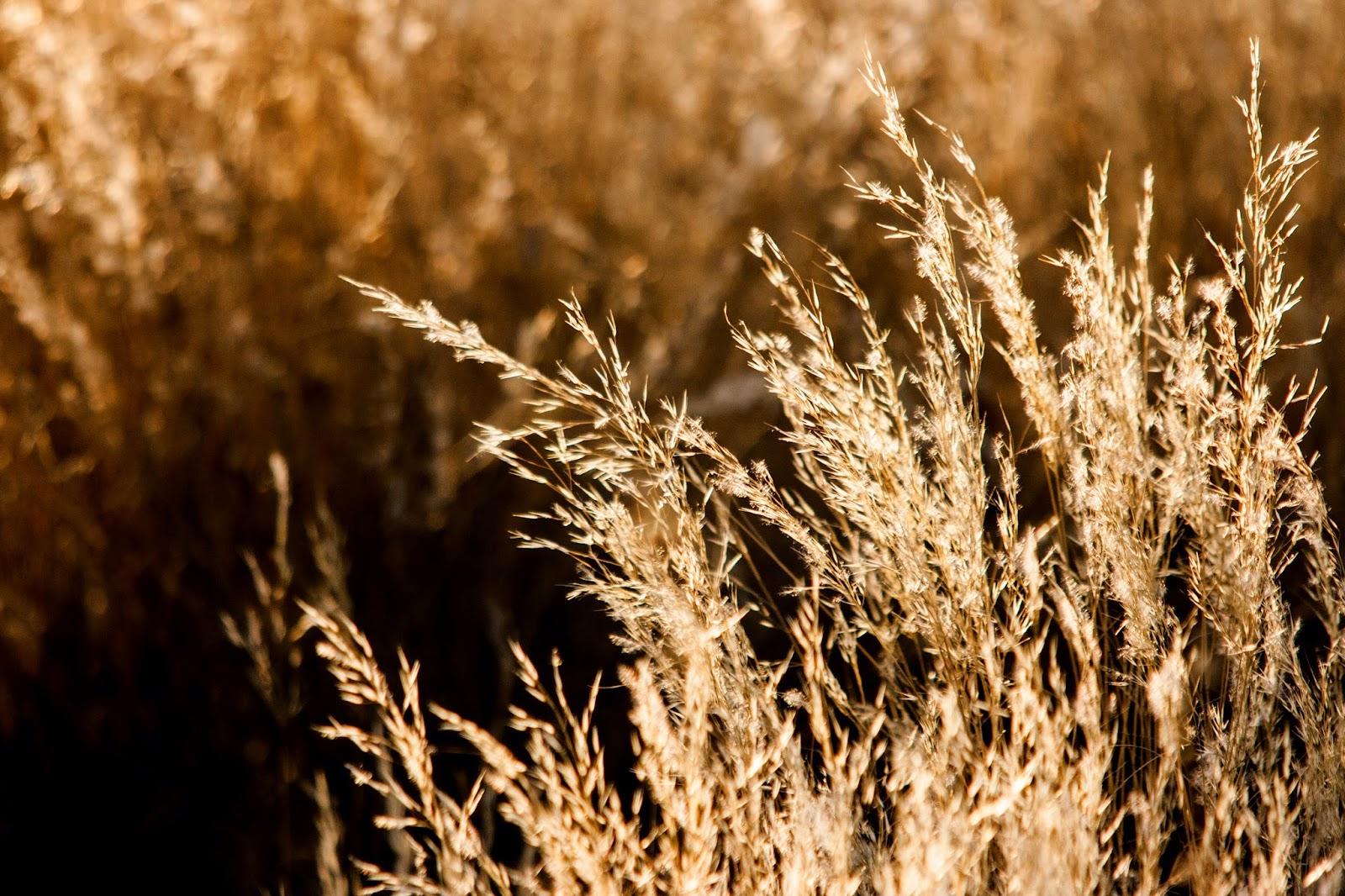 bush grass namibia etosha
