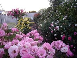 Roses Tea Room Abingdon
