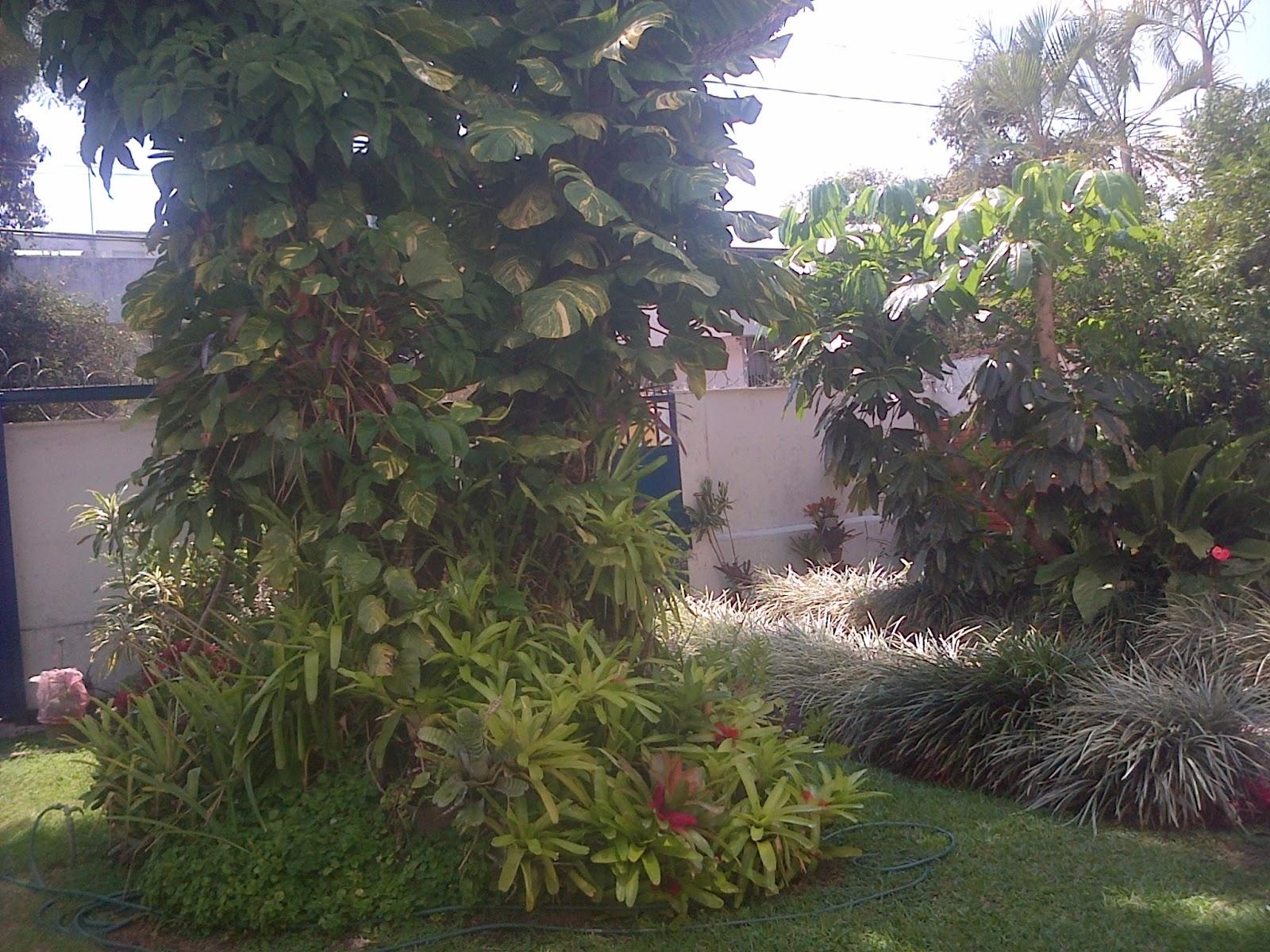 Miscelaneos las plantas de mi jardin for Plantas para mi jardin