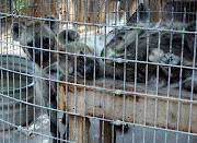 zoo animals pics,zoo animals,endangered animal pics,zoo animals pictures,zoo .