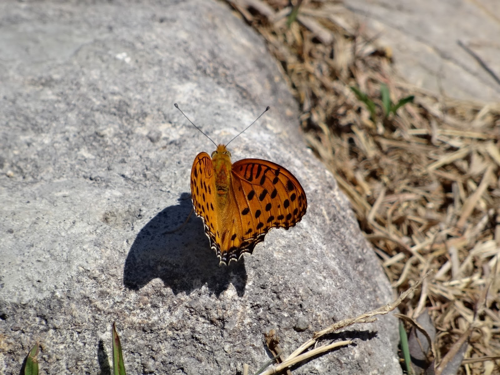 webs of significance a sunset peak hike on a beautiful blue sky a beautiful butterfly spotted along the way up