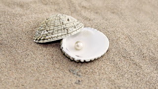 Sand Shells Pearl HD Wallpaper