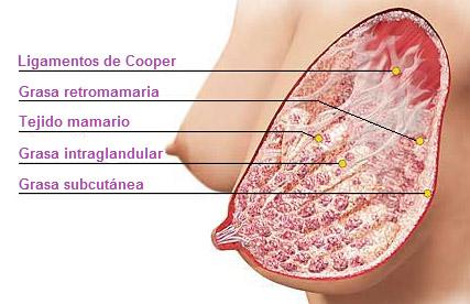 Las operaciones de la reducción del pecho en las clínicas