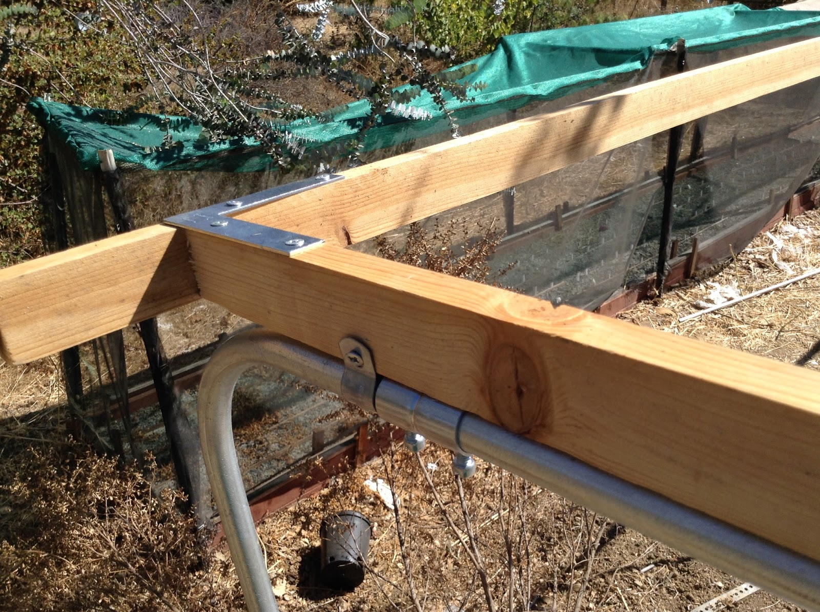 Growing Cool Plants: Building Raised Beds for Bulbs