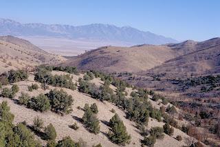 Cedar Mnt Wilderness By BLM [Public domain], via Wikimedia Commons