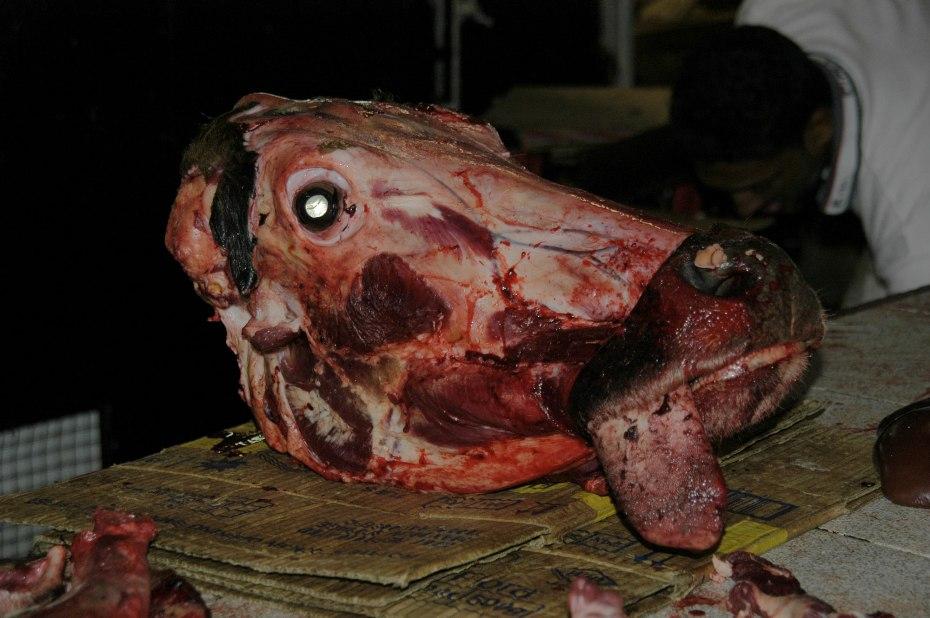 La vaca es, según los biólogos, una prima lejana de la ballena. Qué terrible destino el de ambas.