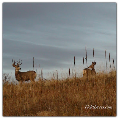 buck, deer, rut, field dress