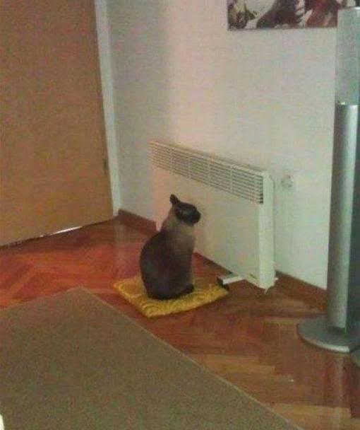 Смешные коты. Кот смотрит в батарее что-то интересное