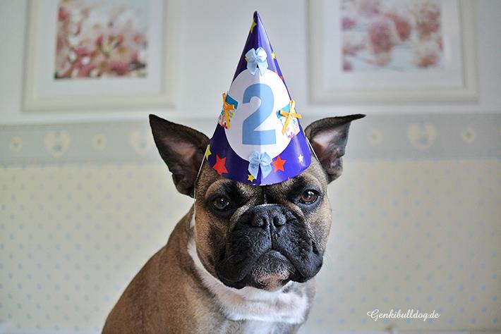 Hundegeburtstag Französische Bulldogge - Genkibulldog Hundeblog