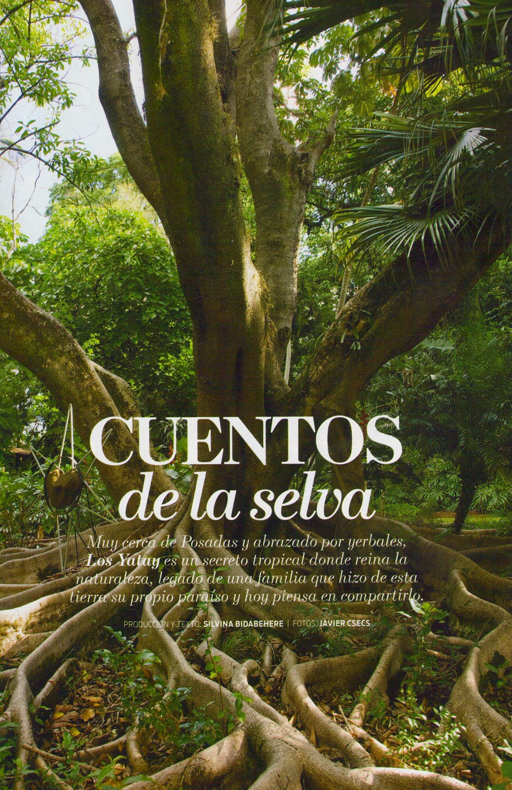 Decortherapia cuentos de la selva for Ahuyentar los gatos del jardin