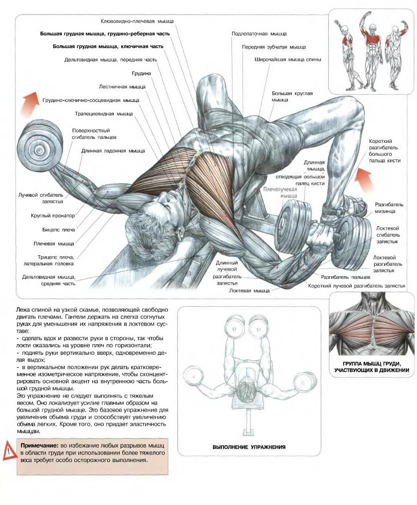Мышцы груди упражнения 11 фотография