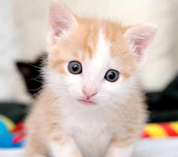 Fotos de gatinhos fofos #12