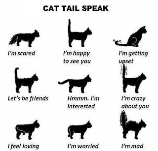 Biểu hiện đuôi mèo cho ta biết được nhiều thứ.
