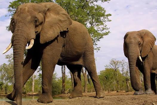 Que significa soñar con Elefantes