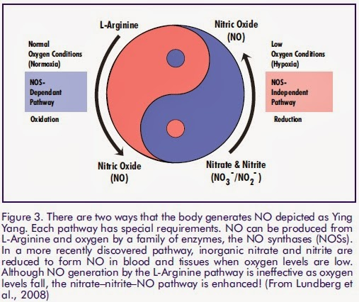 high uric acid level during pregnancy effects of high uric acid in blood