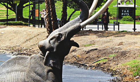 la brea tar pits los angeles california