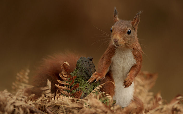 Just chilling by Edwin Kats - Ardilla curiosa - Squirrel