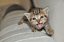 Small Kittens are so cute