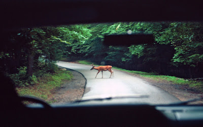 Driving Safety Tips During Michigan's Deer Season