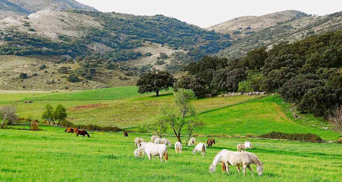 Finca rural y Derecho civil