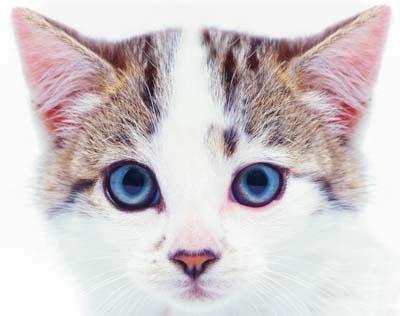 Cute Pussy Cat 16