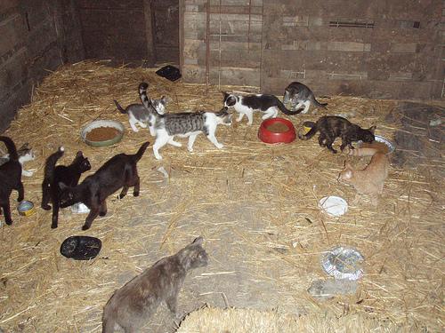 Mèo hoang, mèo không rõ nguồn gốc là nguy cơ lây lan bệnh dịch.