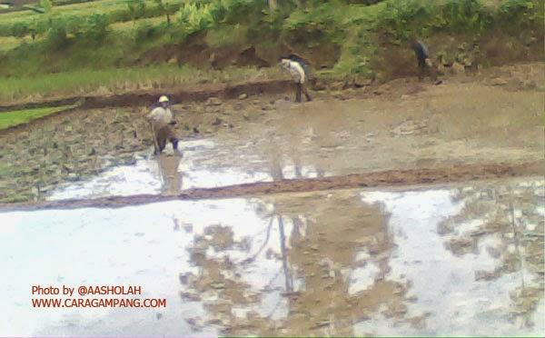 Cara Penentuan Konsistensi Tanah