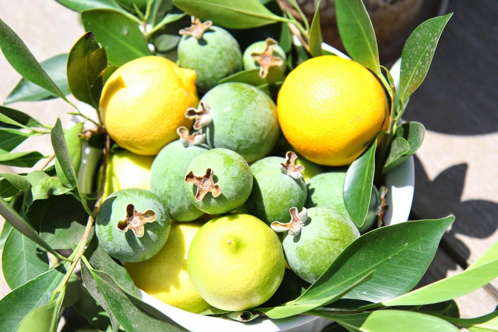 Lemons, Oranges, and Guavas: Simple Summer Fruit Bowl; Nora's Nest