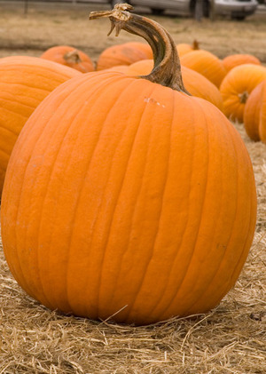 Big Pumpkin Picture - FeaturePicscom - A stock image agency