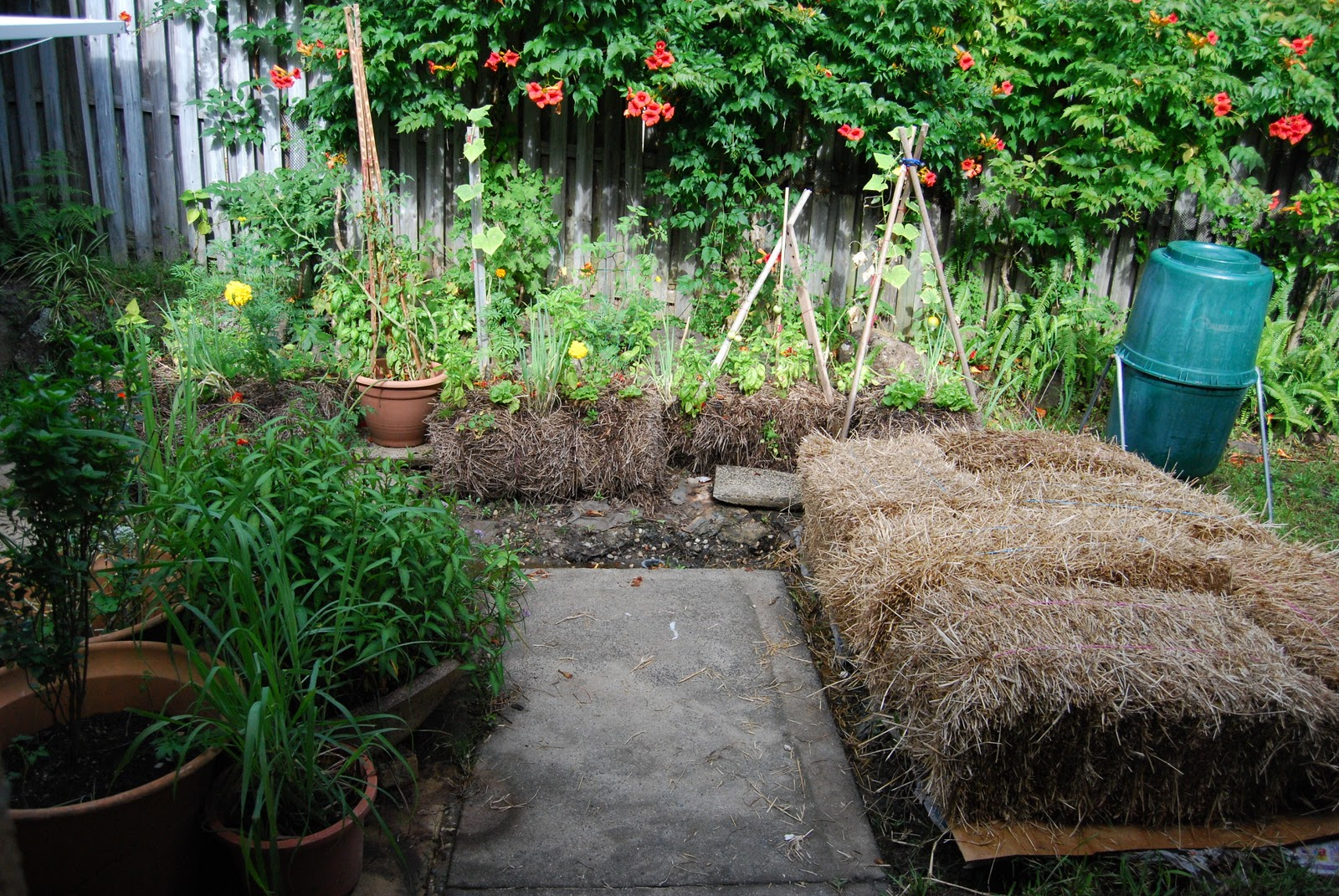 And Pictured Here Is The Start Of My Second Straw Bale Garden