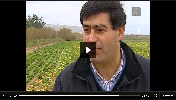 http://www.publico.pt/multimedia/video/oeste-agricultura-afetada-pelo-mau-tempo-2014213200135