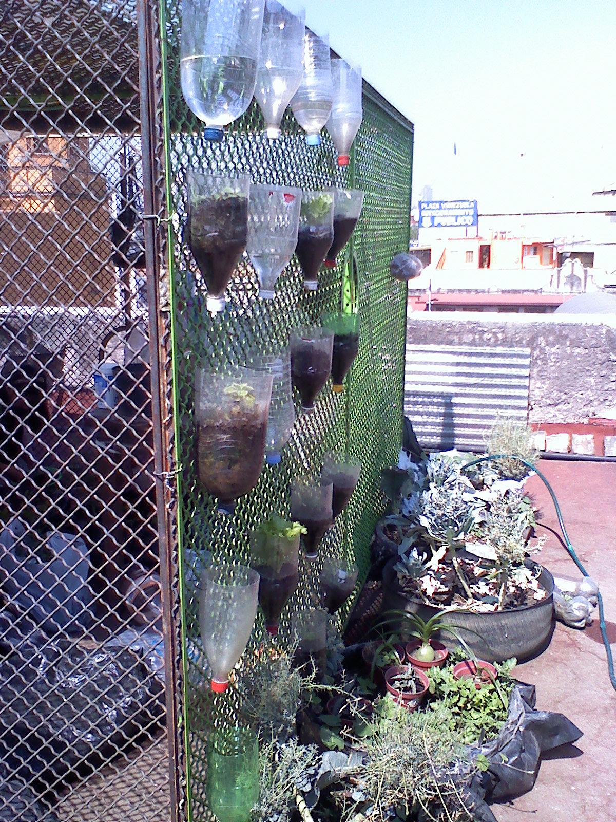 Moxitlan bajo tus pies muro verde con botellas de pet for Materiales para un muro verde