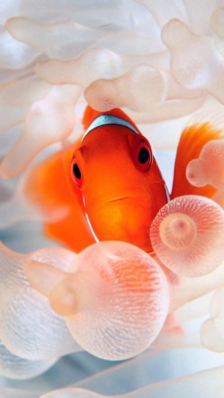Galaxy note hd wallpapers gold fish nemo orange sea for 99 5 the fish