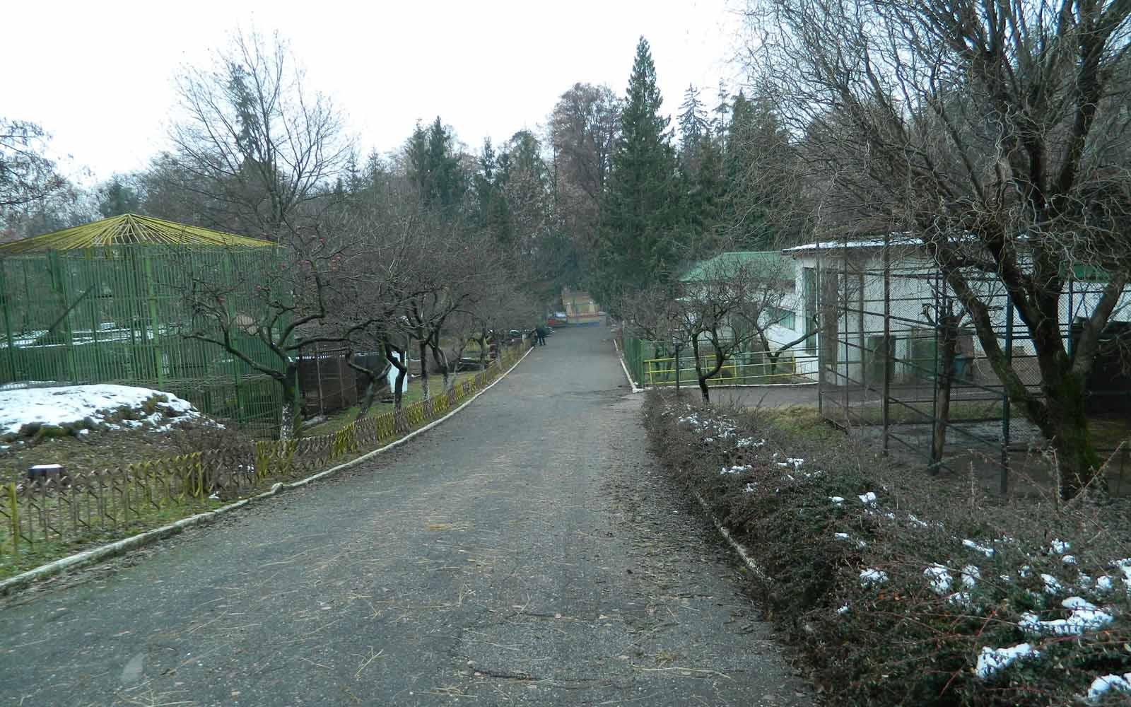 http://2.bp.blogspot.com/-k3t4nbX5gak/UDXC-r6oNtI/AAAAAAAAAhk/Qi9EukZAxMc/s1600/zoo-baia-mare.jpg