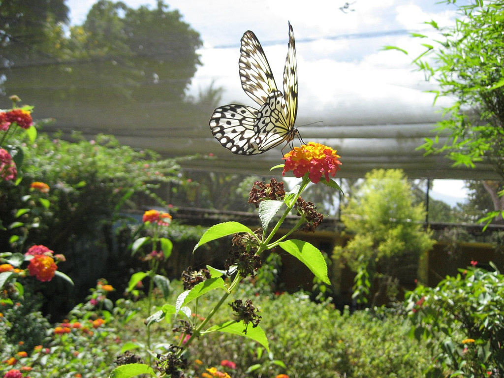 Palawan butterfly garden of exotic philippine flowering for Philippine garden plants