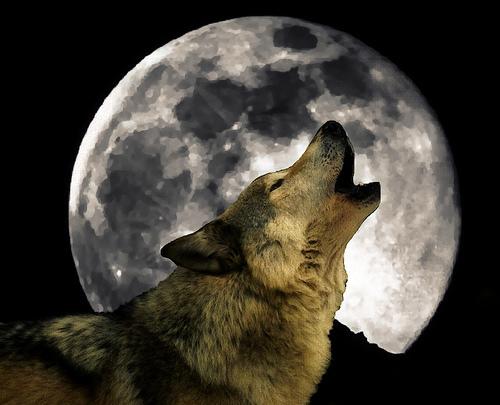 http://2.bp.blogspot.com/-k4R3MXtigzs/TwmIFTWWGgI/AAAAAAAAAVE/cNstfQdHHyI/s1600/wolf-moon.jpg