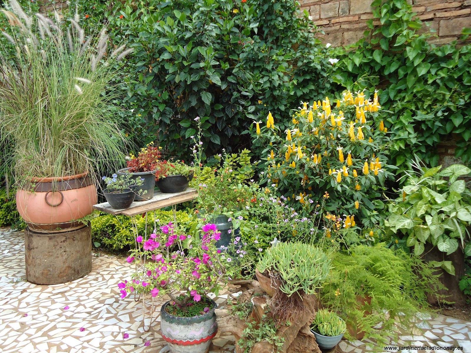 Jardineria eladio nonay tiestos o recipientes jardiner a - Macetas de jardin ...