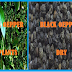 Black Pepper- a seed Small in size but Big benefits