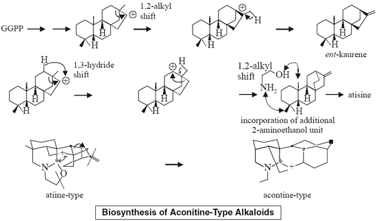Biosynthesis of Aconitine-Type Alkaloids Aconite