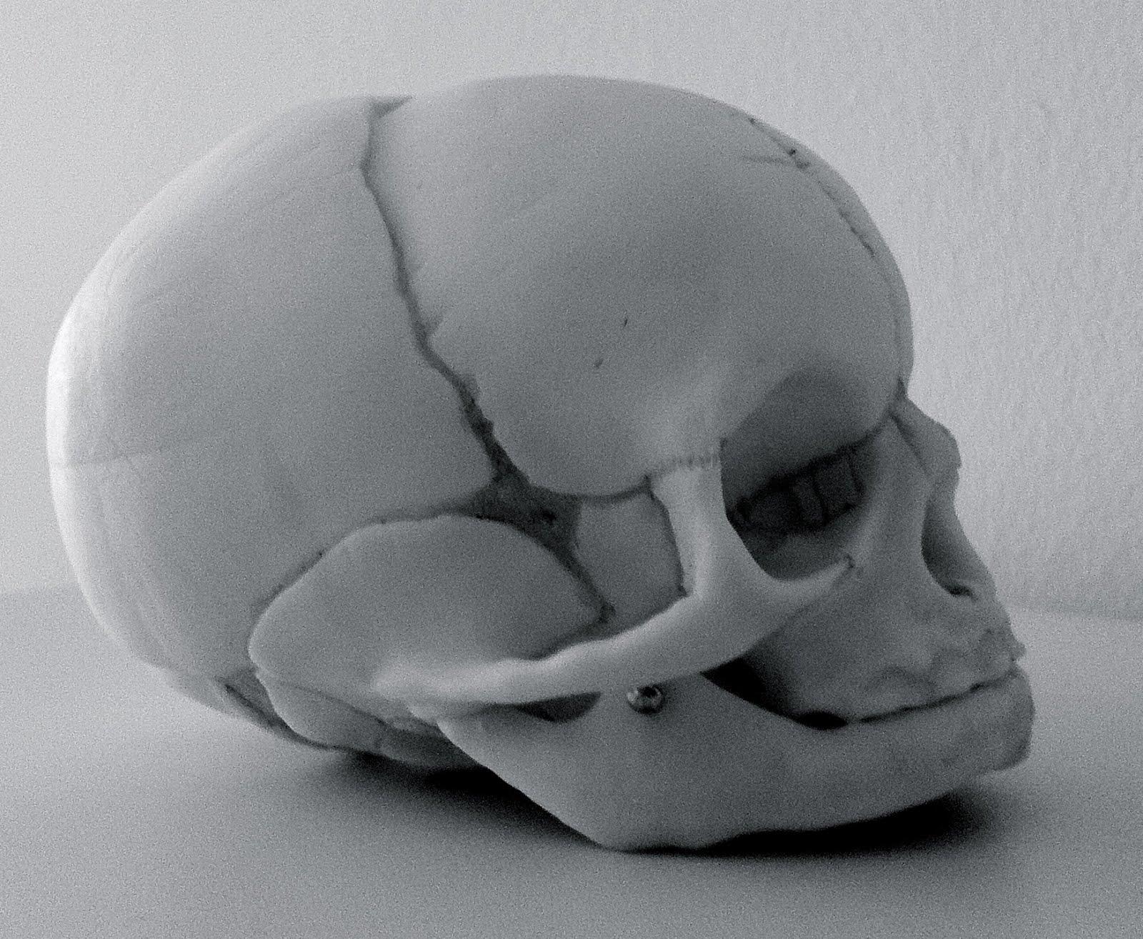 Bonito Cráneo Del Bebé Ornamento - Imágenes de Anatomía Humana ...