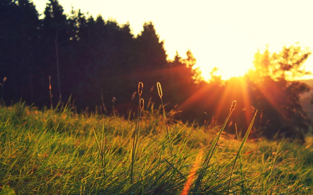 Calirea organismului uman. Intarirea sistemului imunitar. Solutia impotriva racelii. Soare