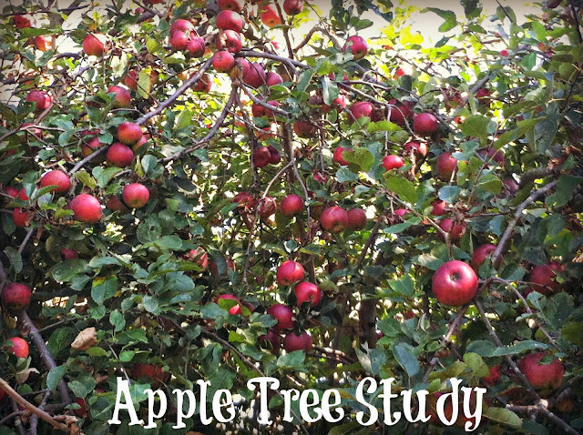 apple tree nature study