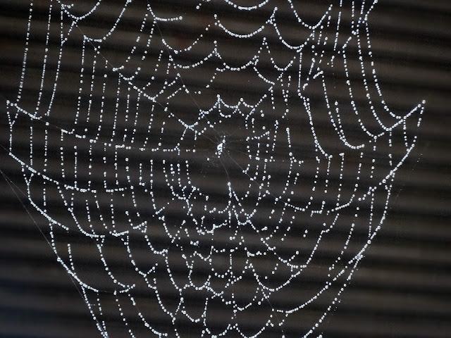 蜘蛛の巣,雨,飯田橋〈著作権フリー無料画像〉Free Stock Photos