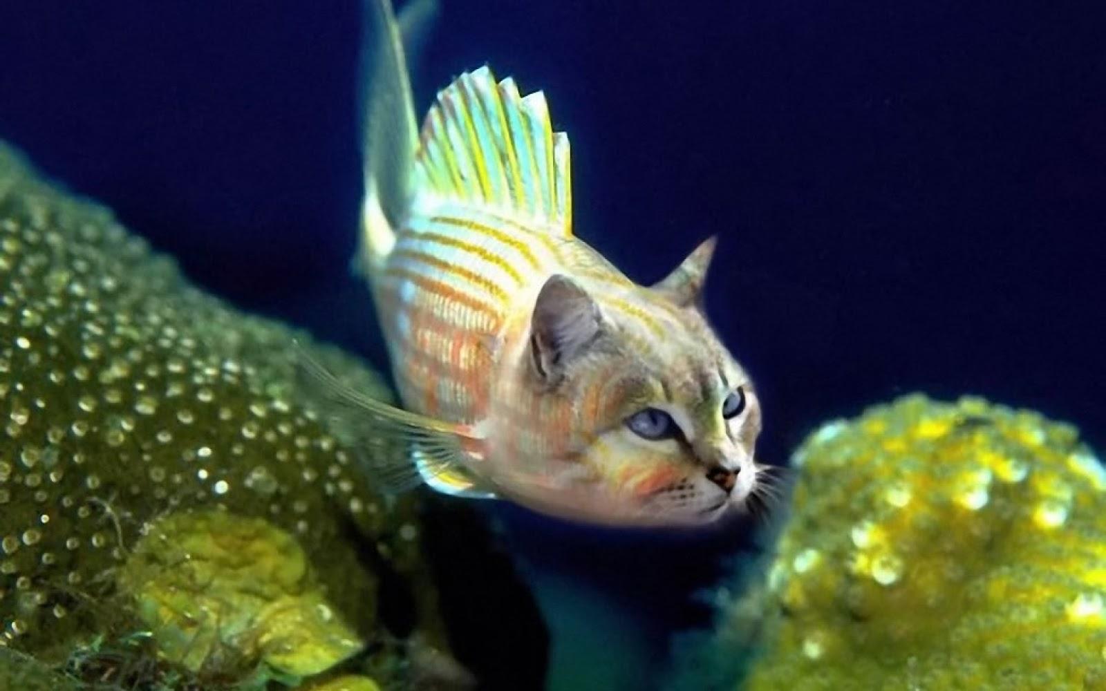 Deco led fish cat ref 1168 for Fish cat 4